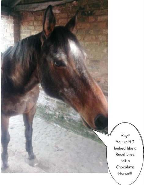 Monty - Would love to be a Racehorse!
